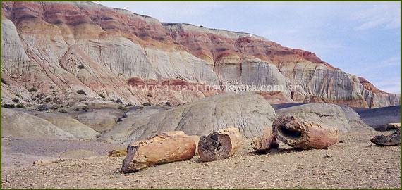 Bosque Petrificado - Chubut
