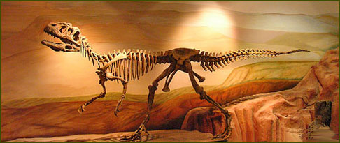 Museo Paleontológico - Chubut