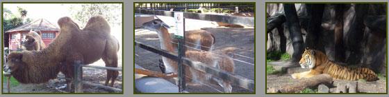 Zoológico - Palermo
