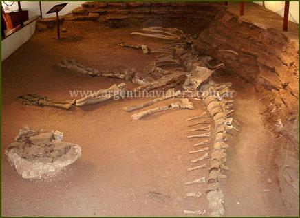 Dinosaurio - Neuquén