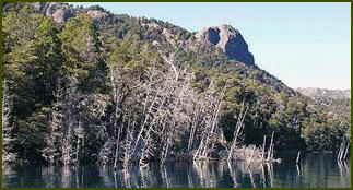 Bosque Sumergido - Neuquén