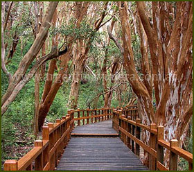 Bosque de Arrayanes - Bariloche