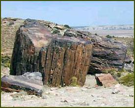 Bosques Petrificados - Puerto Deseado